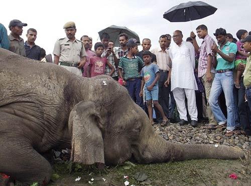 В Индии пассажирский поезд врезался в группу слонов