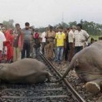 В Индии выясняют обстоятельства того, как пассажирский поезд врезался в группу слонов