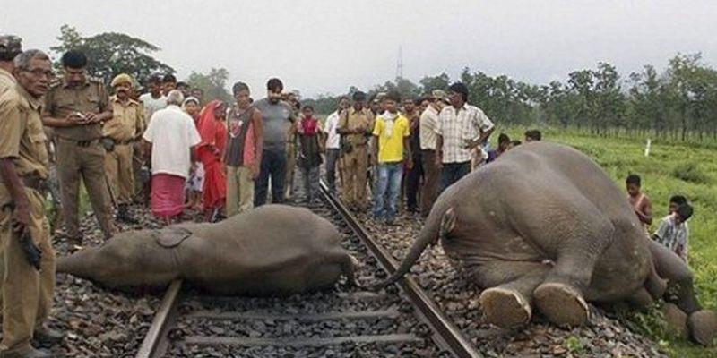 В Индии пассажирский поезд врезался в слонов
